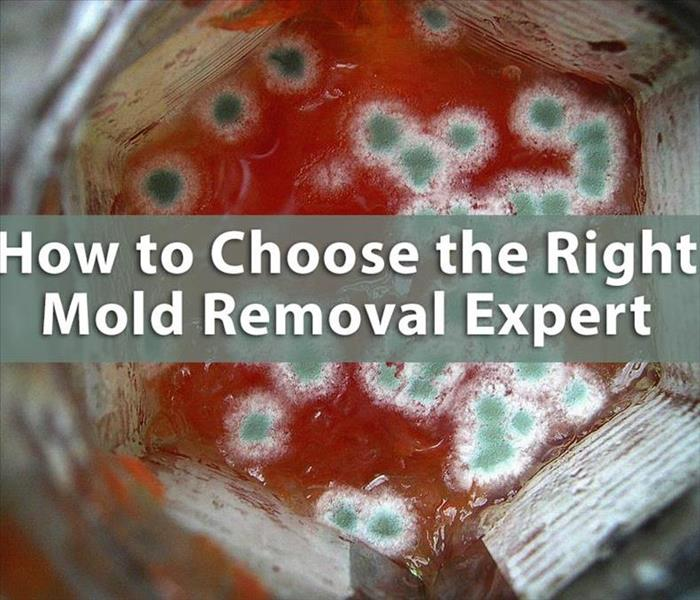 Mold Remediation HOW TO CHOOSE THE RIGHT MOLD EXPERT