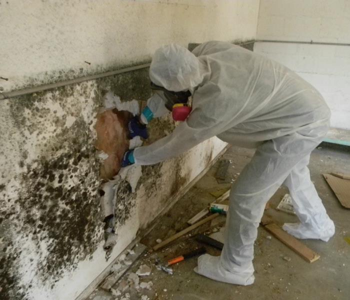 Mold Remediation Tips for Detecting Mold in your Home